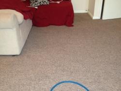 Clean carpet looking as good as new!